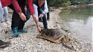 kornjače vraćene u more brijuni